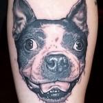 4 - Boston Terrier - Brian Wren