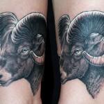 8 - Big Horn Sheep - Brian Wren